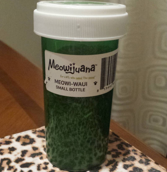 Did you know that catnip, aka kitty pot, also has bug repellent properties? Photo via @pinkchanel49 on Instagram.