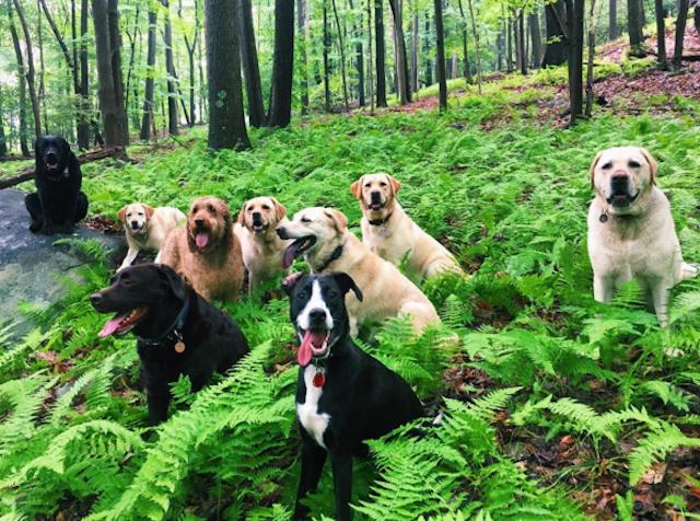 A recent Doggie Day Trips hiking crew, taking a break to pose among the ferns. Photo via @doggiedaytrips