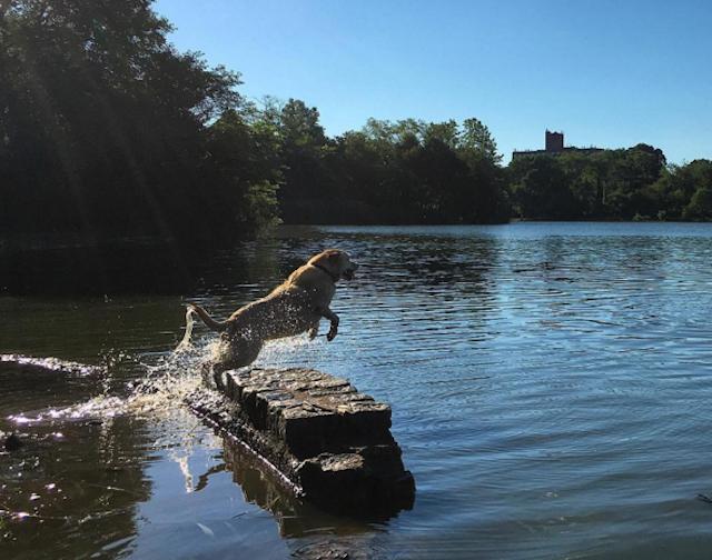 Prospect Park Lake provides some local wildlife. Photo via @doggiedaytrips