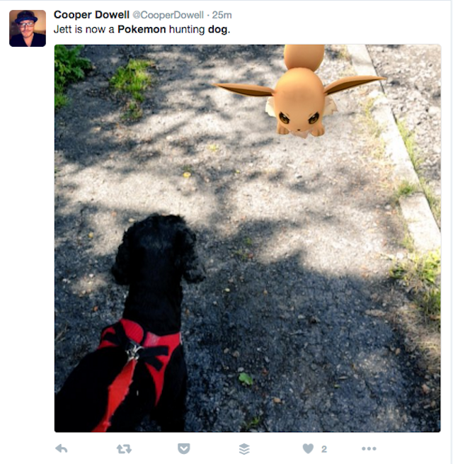 Maybe don't play Pokemon Go while you're walking the dog: New York dog trainers and vets weigh in