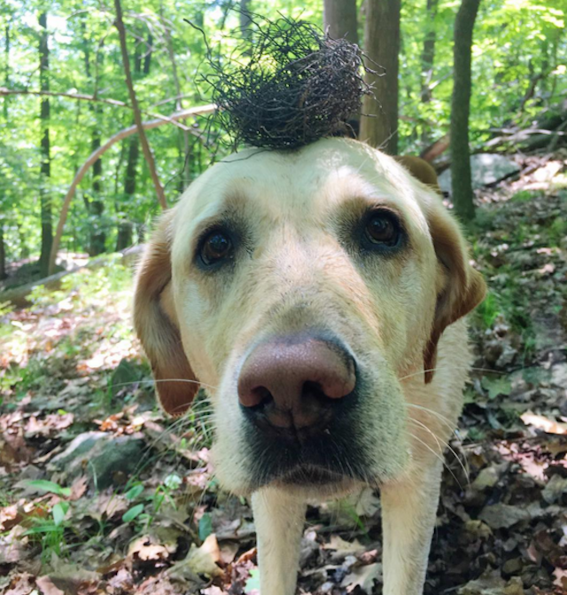 When a city dog goes to the country, he might end up with a bird's nest on his head. Photo via @doggiedaytrips