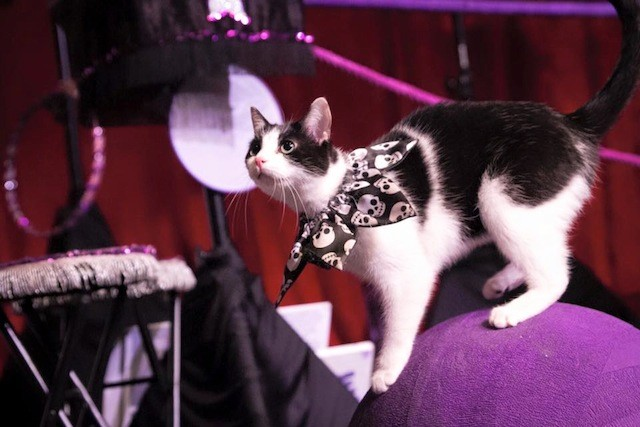 Nope, we're not kitten: make real money by running away with this Chicago cat circus