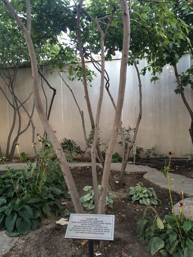 fragrance garden tree (4)
