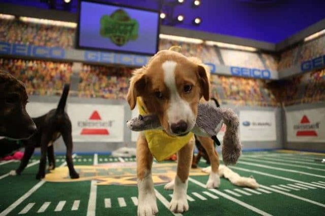 This bar is throwing a Puppy Bowl party on Super Bowl Sunday