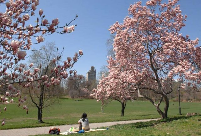 Sometimes all I need is the air that I breathe. Oh, Prospect Park. Stay green, baby. Photo via NYC Parks