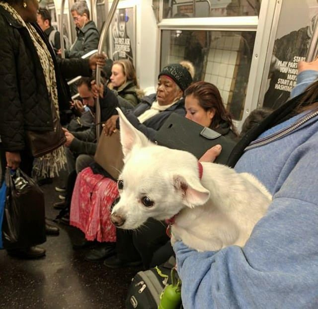 The L can be a scary place, especially when you weigh 14 pounds and are covered in fur. Photo by Hannah Frishberg / Brokelyn