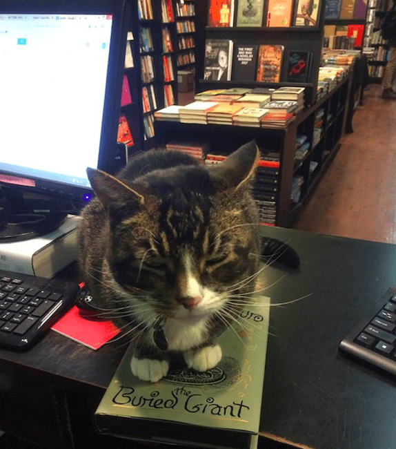 Everyone loves a shop cat. Photo via Community Bookstore / Facebook