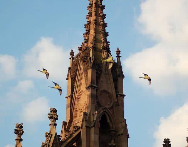 Photo via Brooklyn Parrots