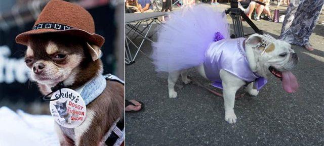 Freddy's 4th annual doggy fashion show is this Saturday