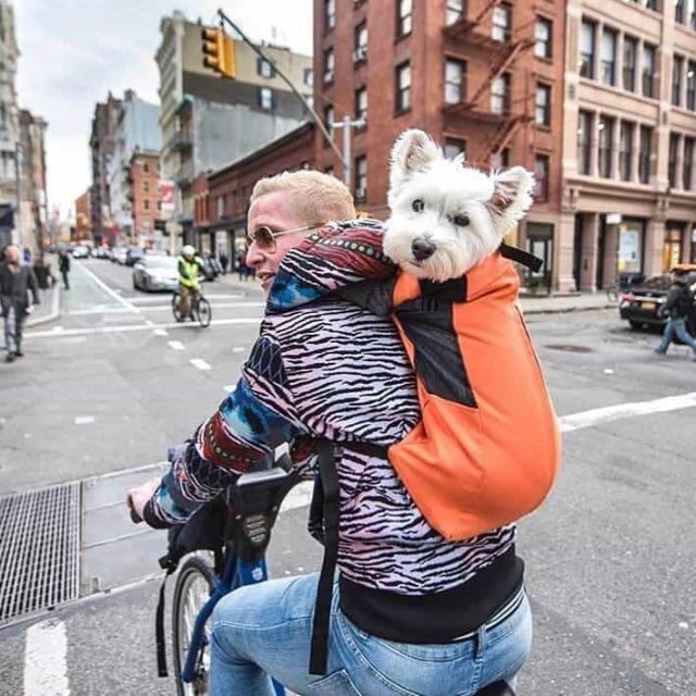 The Brokelyn Files: How many Citi Bikers actually wear helmets?