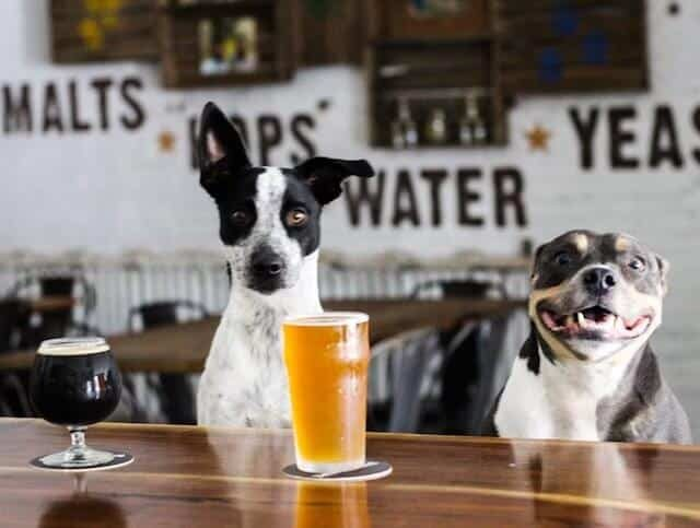 Help dogs rescued from Harvey by drinking beer and petting pups in Gowanus