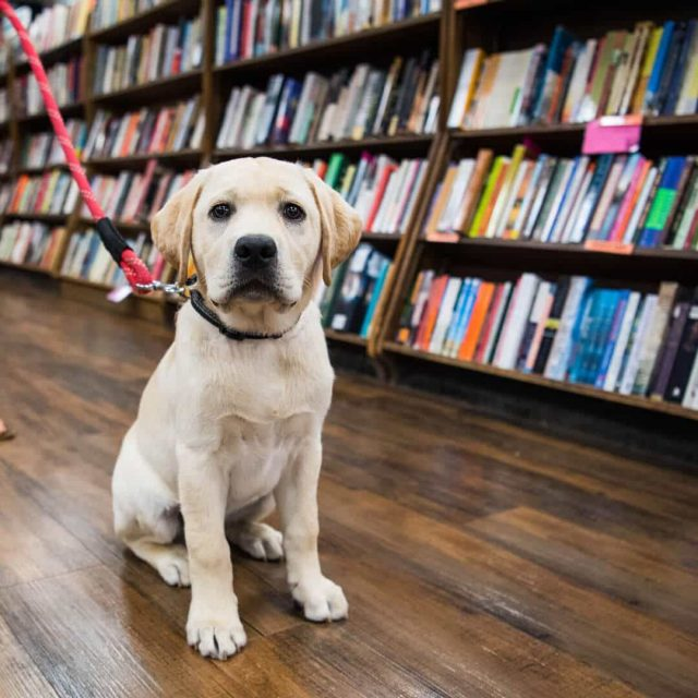 Help rescued dogs by drinking beer at this Brooklyn Brewery book signing tomorrow