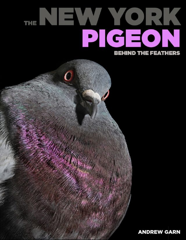 New book celebrates the infamous NYC pigeon (4/25)