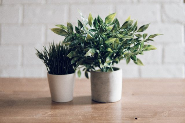 5 plants that will thrive in any small, low light apartment