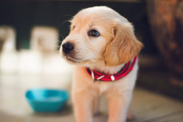 The most popular dog names of 2018 are here
