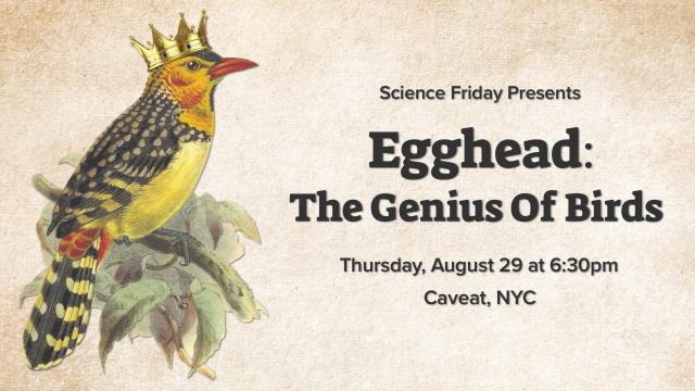 Egghead: The Genius Of Birds