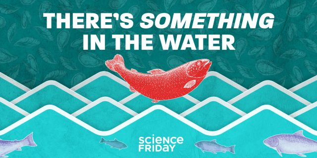 There's Something in the Water with Science Friday