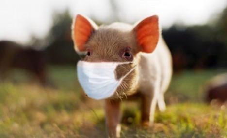 taste of science presents Flu Season!